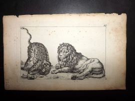 Sayer Compleat Drawing-Book 1757 Antique Print Study of Lion, Cheetah Panther 95
